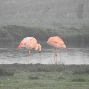 flamingos - als noch wasser da war...